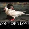 Confusedex8